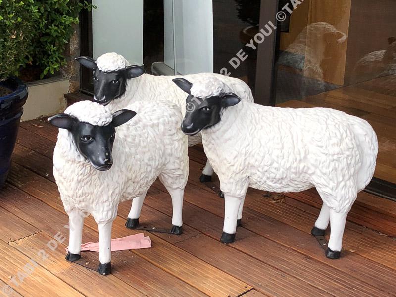 モンサンミッシェル 羊